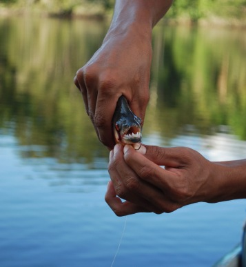 Fishing for piranha!