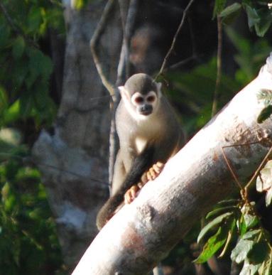 We saw 4 types of monkeys